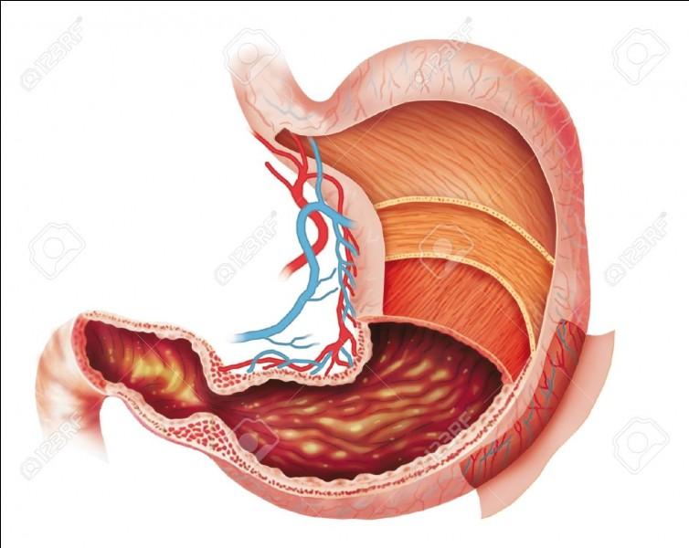 Que pourraient dissoudre les acides produits par l'estomac ?