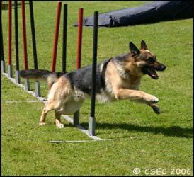 Quel sport canin pratique ce chien ?