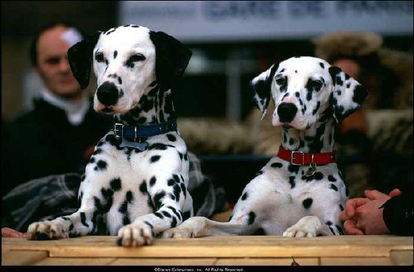Dans quel film jouent ces chiens ?