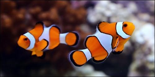 Avec quel organe les poissons respirent-ils ?