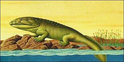 À quelle époque l'ichtyostega a-t-il vécu ?