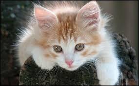 """Comment dit-on le mot """"chat"""" en allemand ?"""