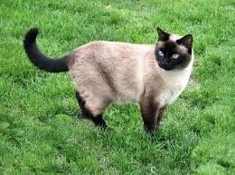 Les chats dans tous leurs états ! (2)