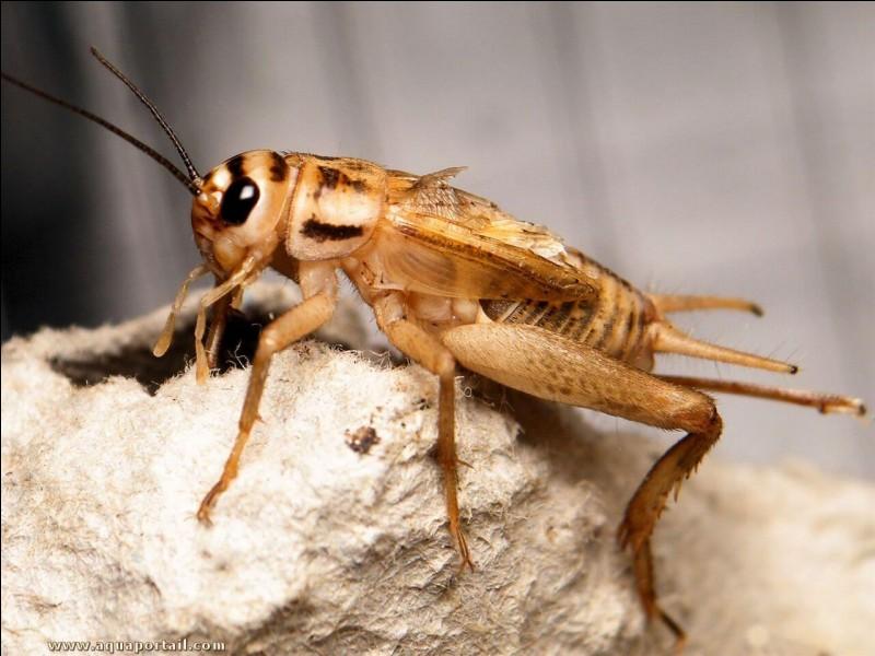 C'est l'insecte qui te suggère le nom du personnage !