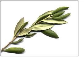 Selon la légende, avec quel arbre a-t-on fabriqué la massue d'Héracles ?