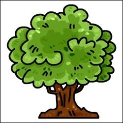 Et que font les feuilles en plus de changer de couleur ?