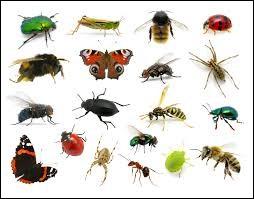 Parmi ces petites bêtes, lequel n'est pas un insecte ?