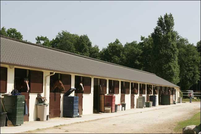 Jym et sa femme Mary ont acheté une écurie. Ils prévoient acheter 21 chevaux et prendre en pension une demi-douzaine de poneys. Comment de pattes pourront-ils compter ?