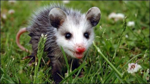 Trouvez la bonne photo grâce à ce jeune animal !