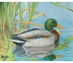 Les canards dans tous leurs états ! (2)