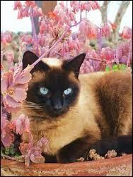 Plante à bulbe, aux fleurs très parfumées : ja...