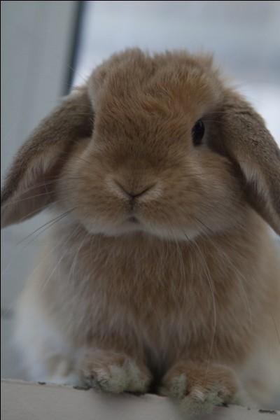 De quelle race ce lapin est-il ?