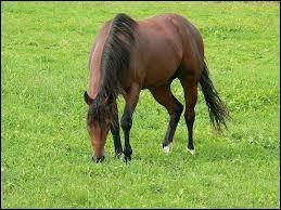 Combien de temps le cheval passe-t-il à brouter dans la journée ?