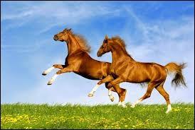 Deux chevaux peuvent-ils avoir exactement la même robe ?