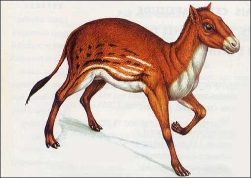 Quel est l'ancêtre du cheval ?