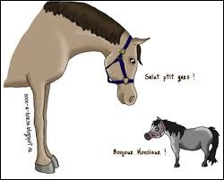 Quelle est la limite de taille poney/cheval ?