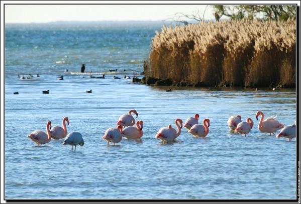 Dans quelle région naturelle se trouve l'étang de Vaccarès ?