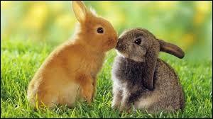 En 1859, combien de lapins l'Australie comptait-elle ?