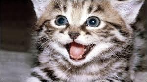 Comment a-t-on appelé le premier clone chez les chats ?