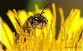 Que n'ont pas les abeilles ?