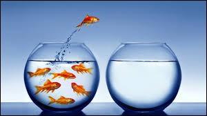 De quelle couleur les poissons rouges peuvent-ils devenir ?