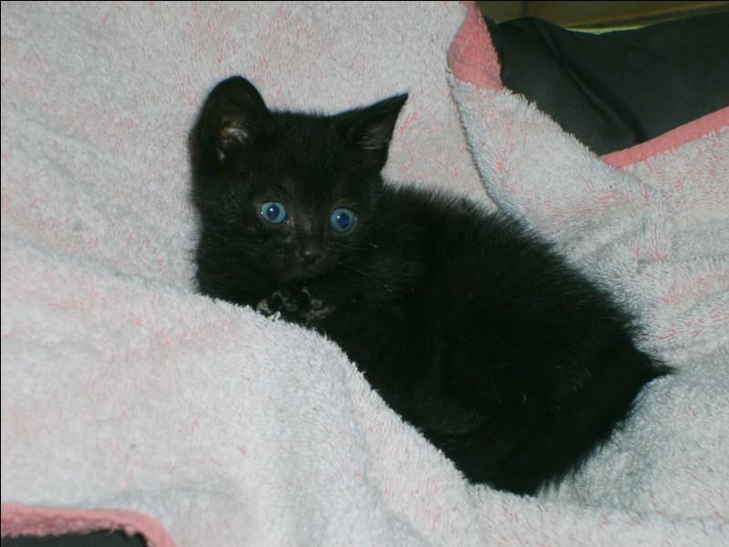 Quand tu vois un chat noir, que fais-tu ?