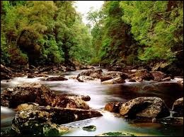 Lorsque tu es près d'une rivière, que fais-tu ?