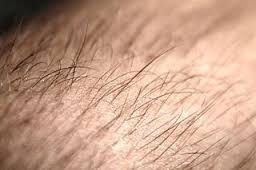 Quel poil es-tu ?
