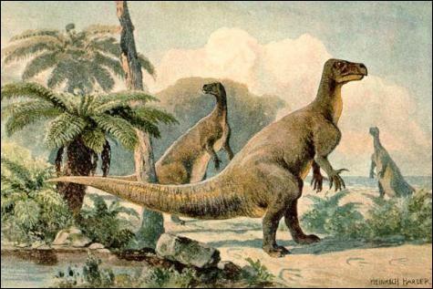 Quels sont les squelettes de deux animaux actuels dont le paléontologue s'inspira pour reconstituer les iguanodons de Bernissart ?