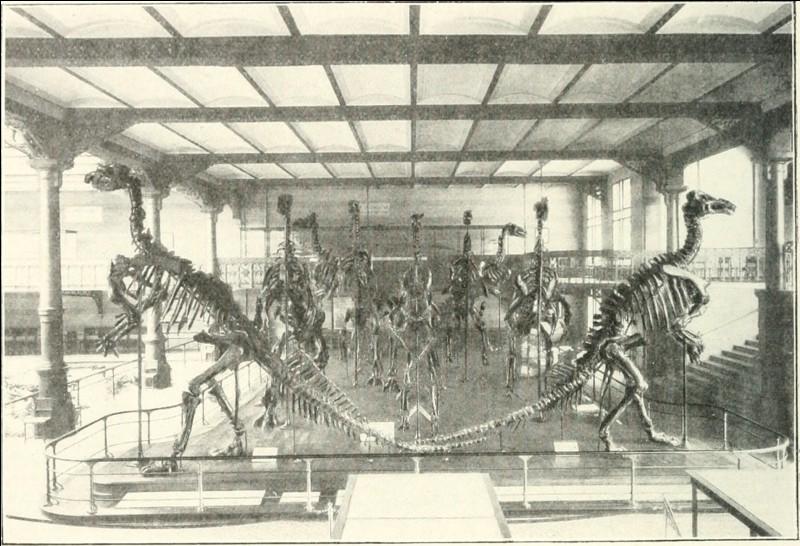 Aujourd'hui, les squelettes d'iguanodons exposés à Bernissart ont été démontés puis remontés. Pourquoi ?