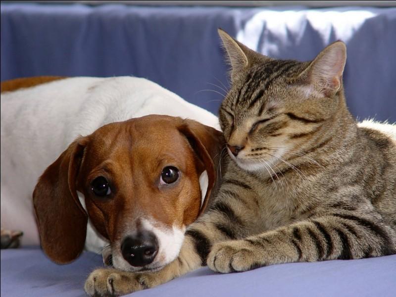 Quizz chat ou chien 2 quiz chats - Chat ou chien ...