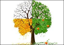 Comment préférez-vous les arbres ?