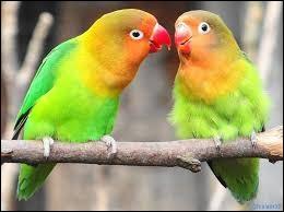 Ce matin, qu'as-tu fait en entendant des oiseaux chanter ?