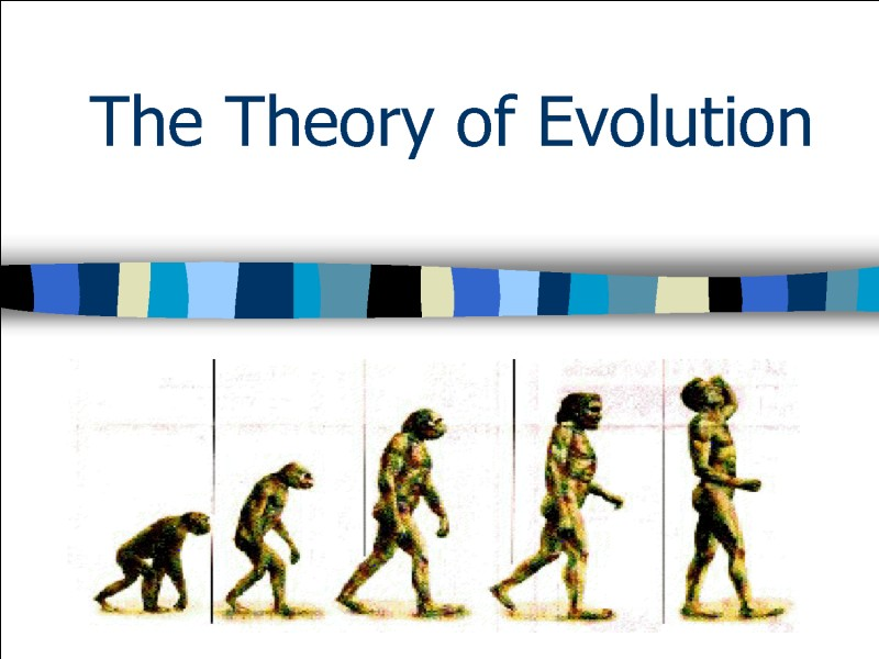 À qui doit-on l'idée d'évolution des espèces par sélection naturelle ?