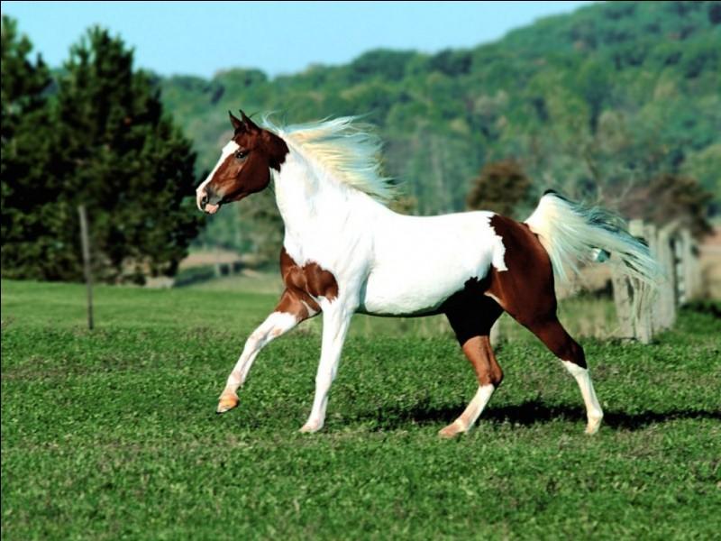Quel cheval, entre ces deux réponses, est un cheval léger ?