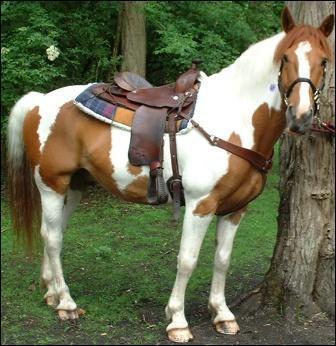 De quelle couleur est ce cheval?