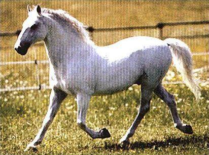Les différentes robes du cheval