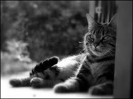 De quelle couleur le chat est-il quand il porte malheur ?