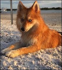 Quel est ce chien ? (Si c'en est un.)