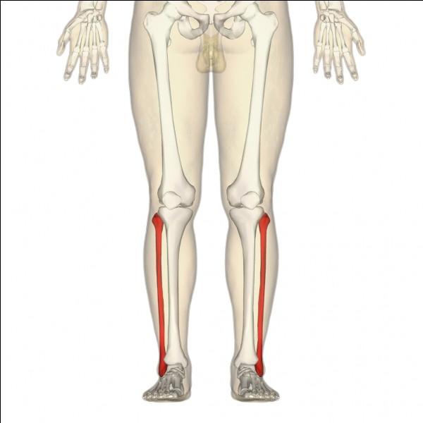 Comment appelle-t-on ces os qui se trouvent dans la jambe ?