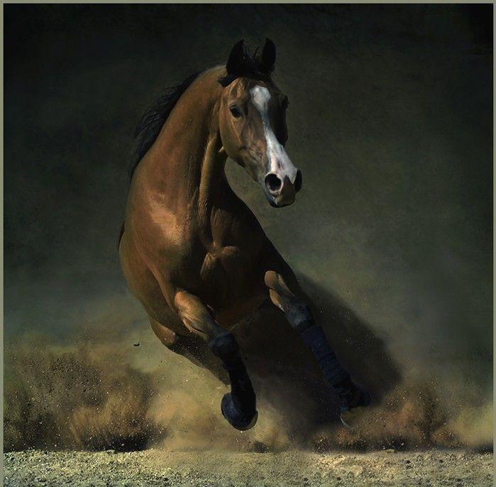 Le cheval : astuces pour perfectionement