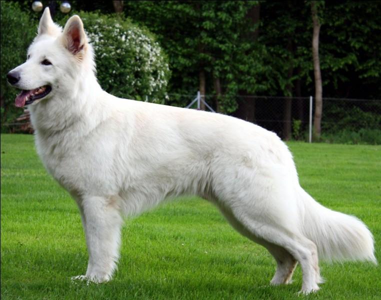 Quel est le nom de ce magnifique chien ?
