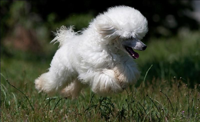 Qu'entends-tu dans le nom de ce chien ?