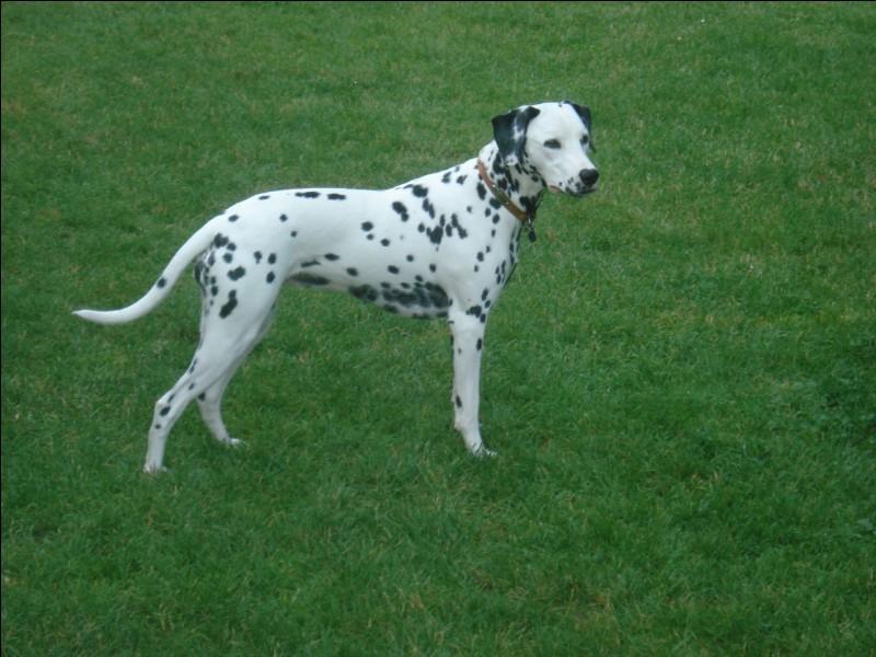 Quelle est la bonne orthographe du nom de ce chien ?