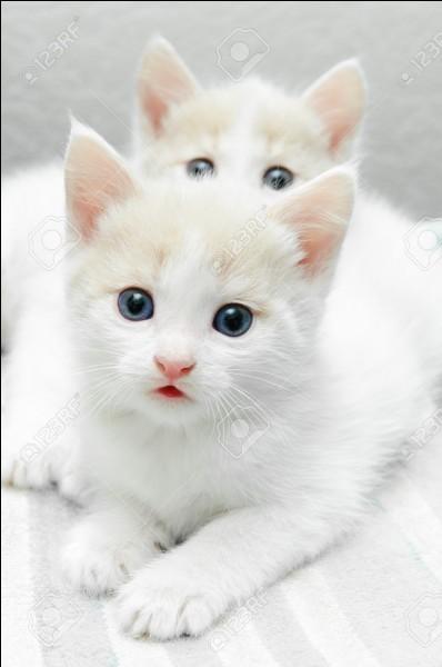 Combien de chatons vois-tu sur cette photo ? Par quelle lettre se termine ce nombre ?