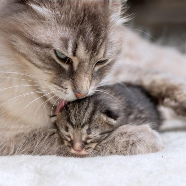 Tu connais le nom de la maman de ce chaton. Quelle lettre est écrite deux fois dans ce nom ?