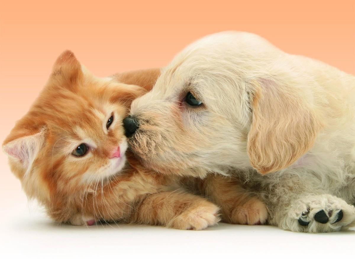 Le bon mot - 22 - Chats et chiens